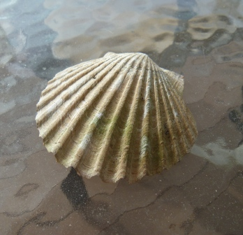 NMWC Shell